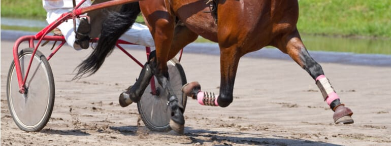 horse hooves and harness racing cart